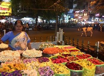 Quand aller à Bangalore ?